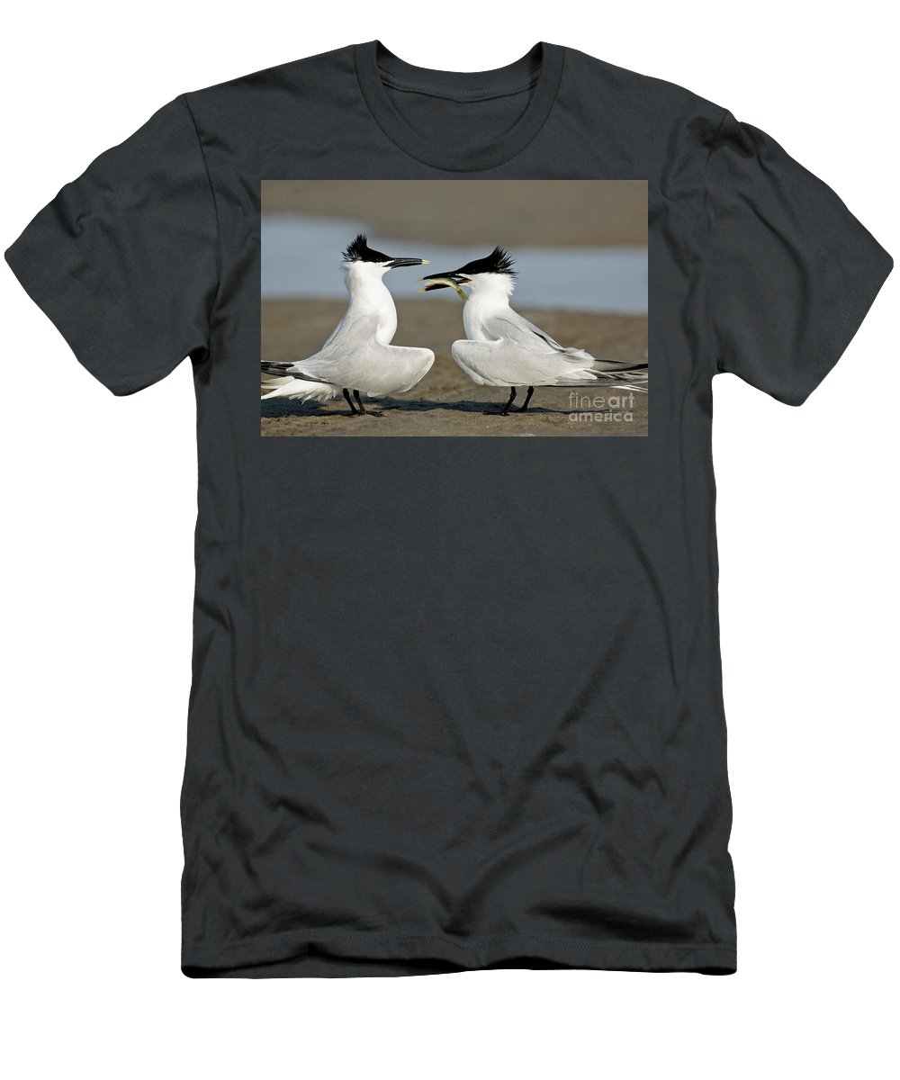 Animal Men's T-Shirt (Athletic Fit) featuring the photograph Sandwich Tern Offering Fish by Anthony Mercieca
