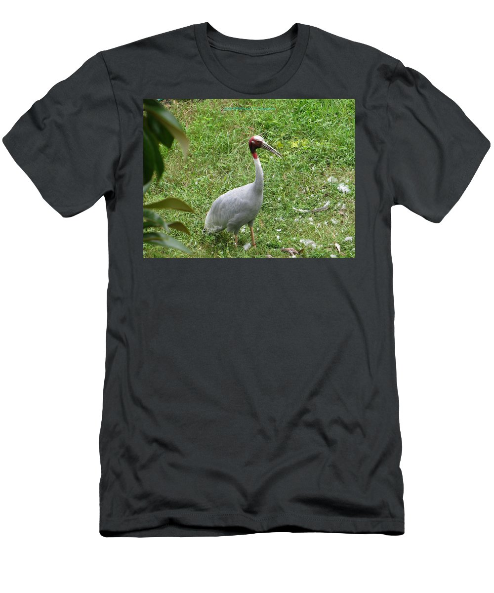 Sarus Crane Men's T-Shirt (Athletic Fit) featuring the photograph Sarus Crane by Sonali Gangane