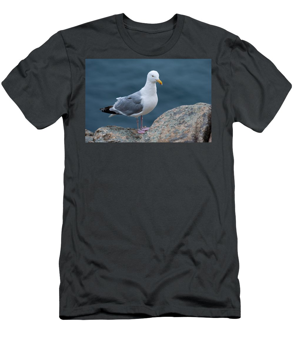 Acadia National Park Men's T-Shirt (Athletic Fit) featuring the photograph Seagull by Sebastian Musial