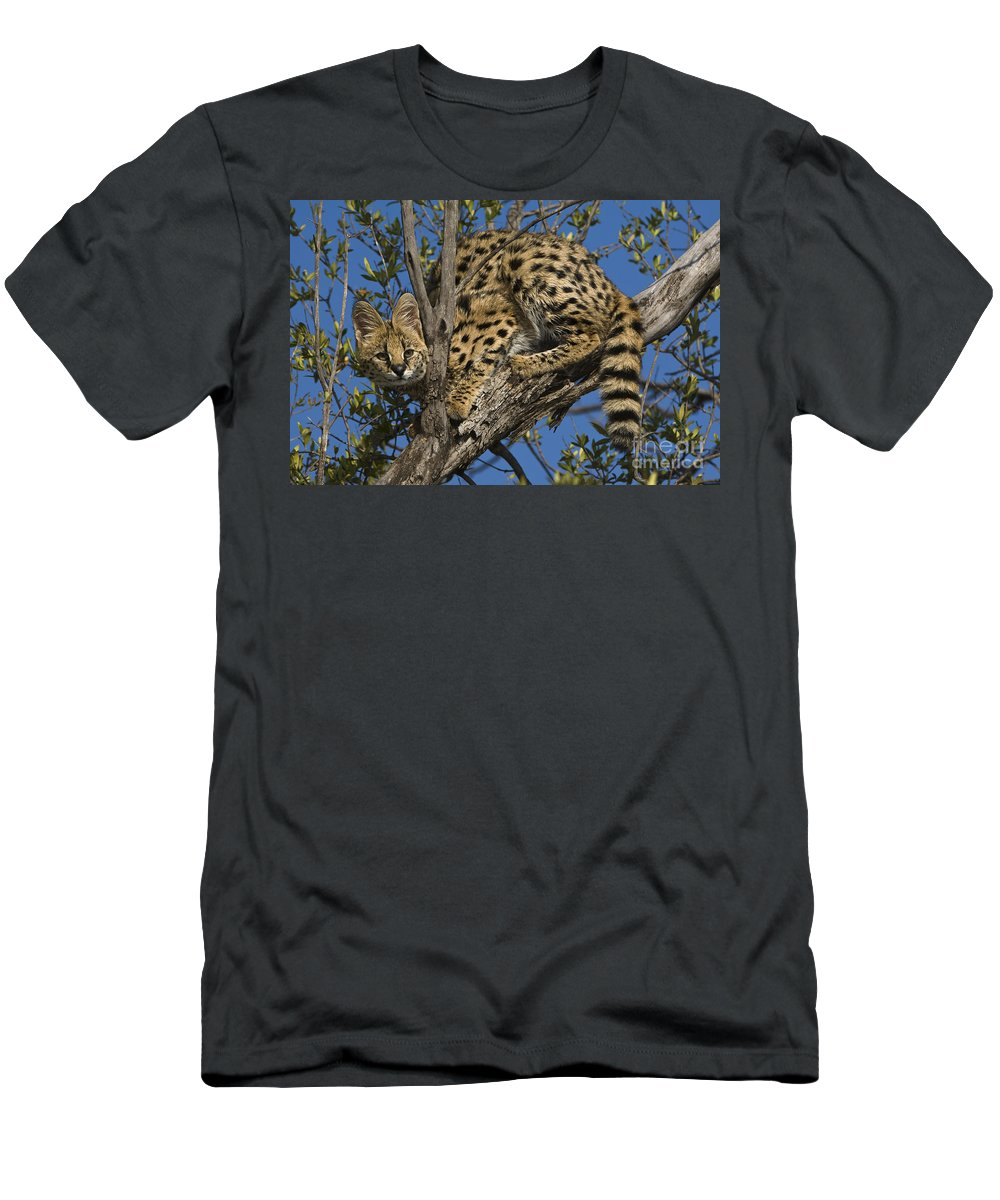 African Fauna Men's T-Shirt (Athletic Fit) featuring the photograph Serval by John Shaw