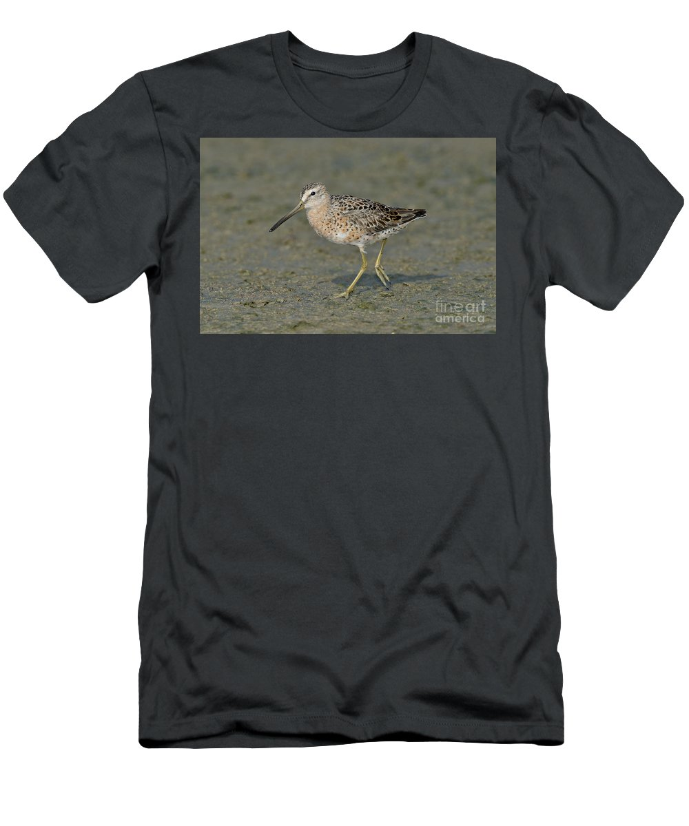 Short-billed Dowitcher Men's T-Shirt (Athletic Fit) featuring the photograph Short-billed Dowitcher by Anthony Mercieca