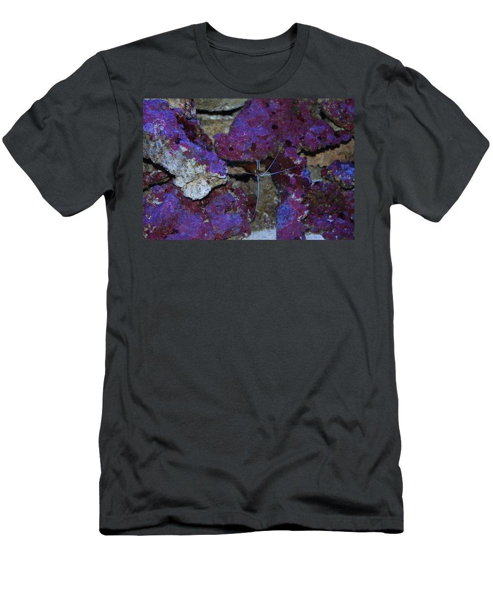 Taken Through Side Of Aquarium Men's T-Shirt (Athletic Fit) featuring the photograph Shrimp by Robert Floyd