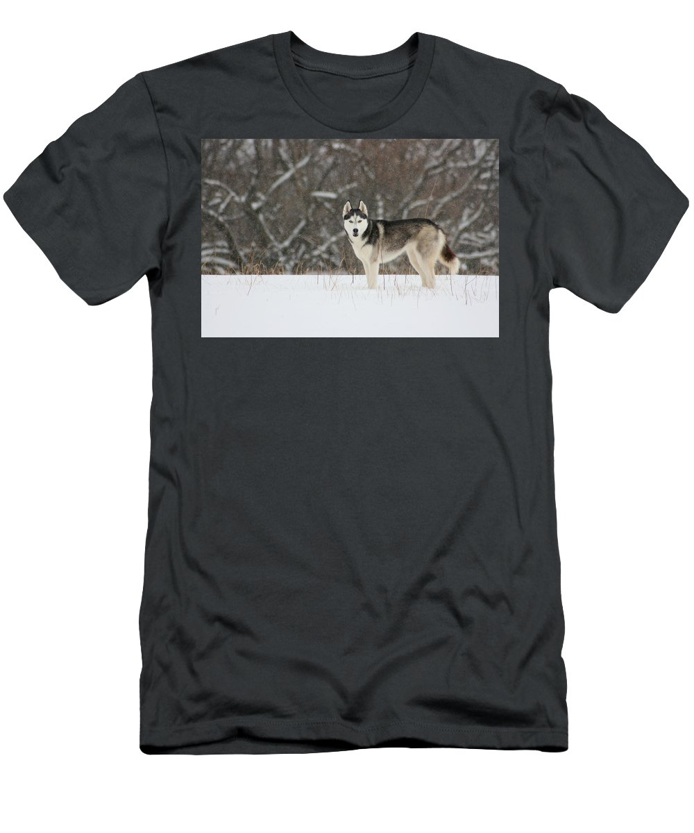 Landscape Men's T-Shirt (Athletic Fit) featuring the photograph Siberian Husky 20 by David Dunham