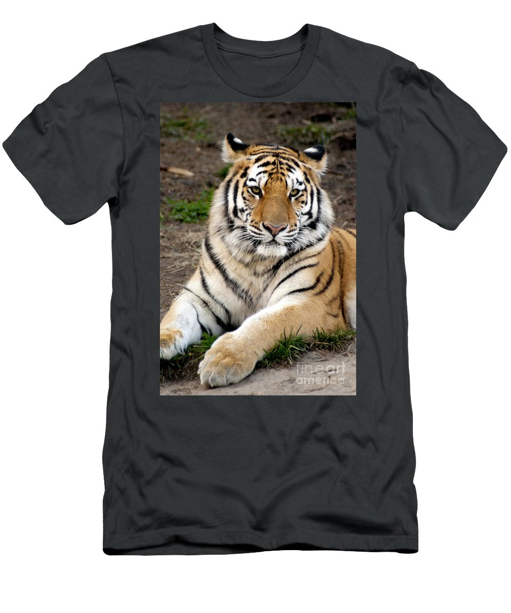 Siberian Tiger Men's T-Shirt (Athletic Fit) featuring the photograph Siberian Tiger by Anthony Totah