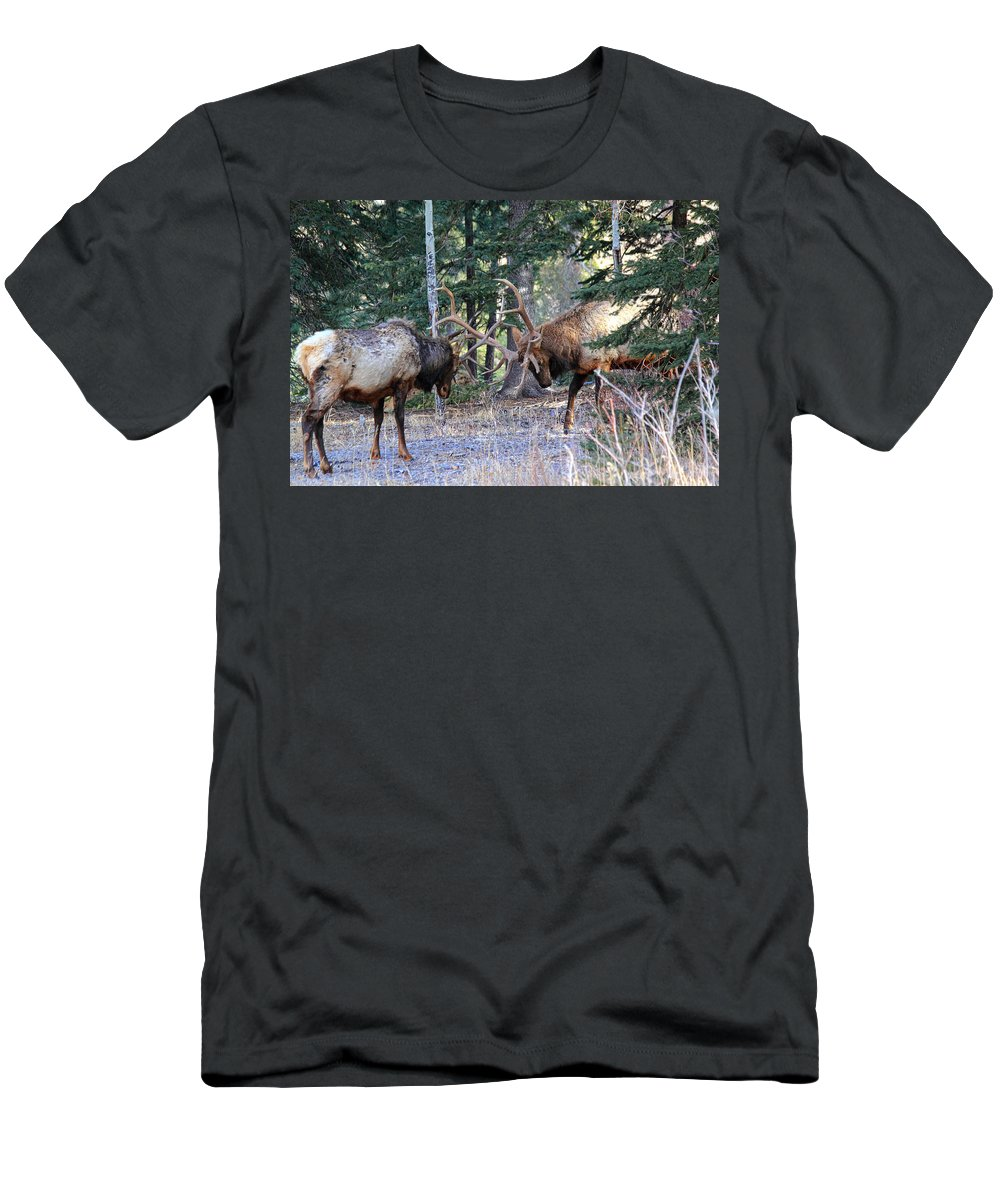 Elk Men's T-Shirt (Athletic Fit) featuring the photograph Size Matters by Shane Bechler