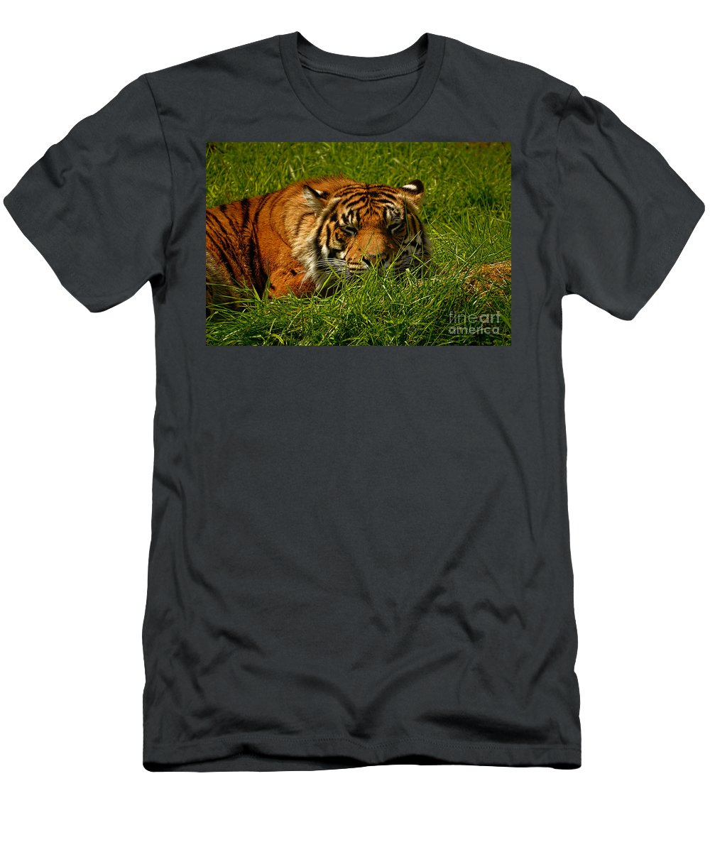 Black Men's T-Shirt (Athletic Fit) featuring the photograph Sleeping Tiger by Rich Priest