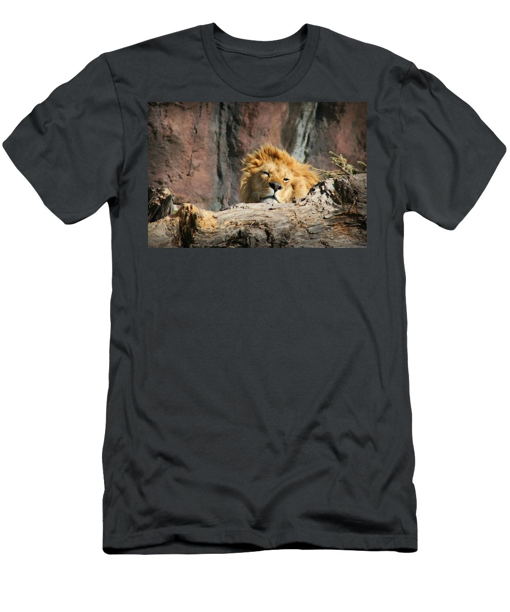 Lion Men's T-Shirt (Athletic Fit) featuring the photograph Sleepy Lion by Amy Jackson