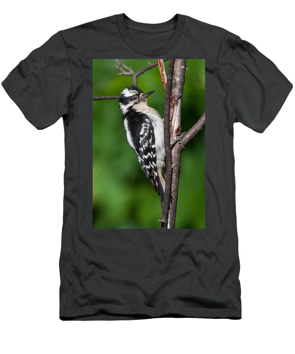 Bird Men's T-Shirt (Athletic Fit) featuring the photograph Sleepy Woodpecker by Richard Kitchen