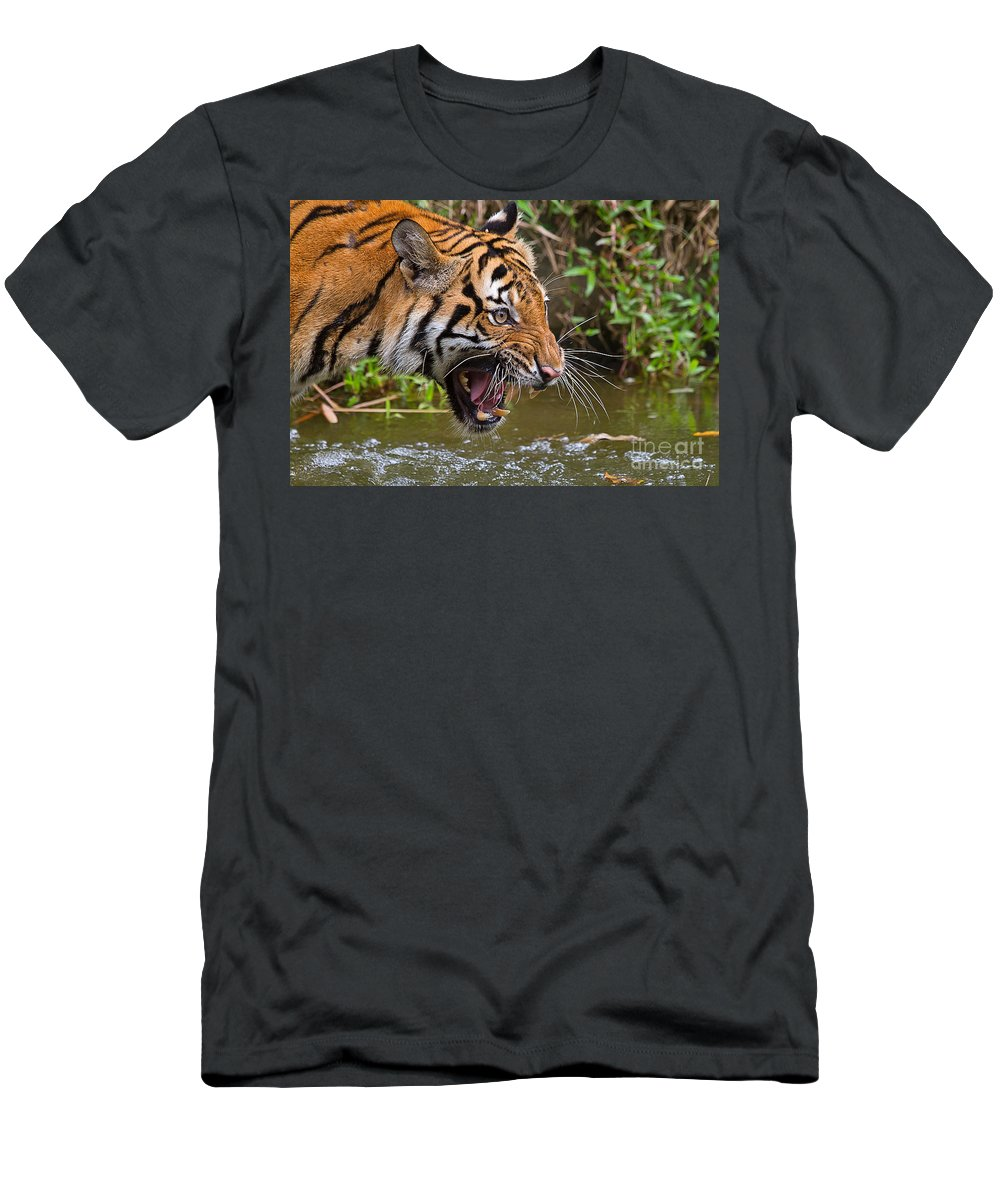Nature Men's T-Shirt (Athletic Fit) featuring the photograph Snarling Tiger by Louise Heusinkveld
