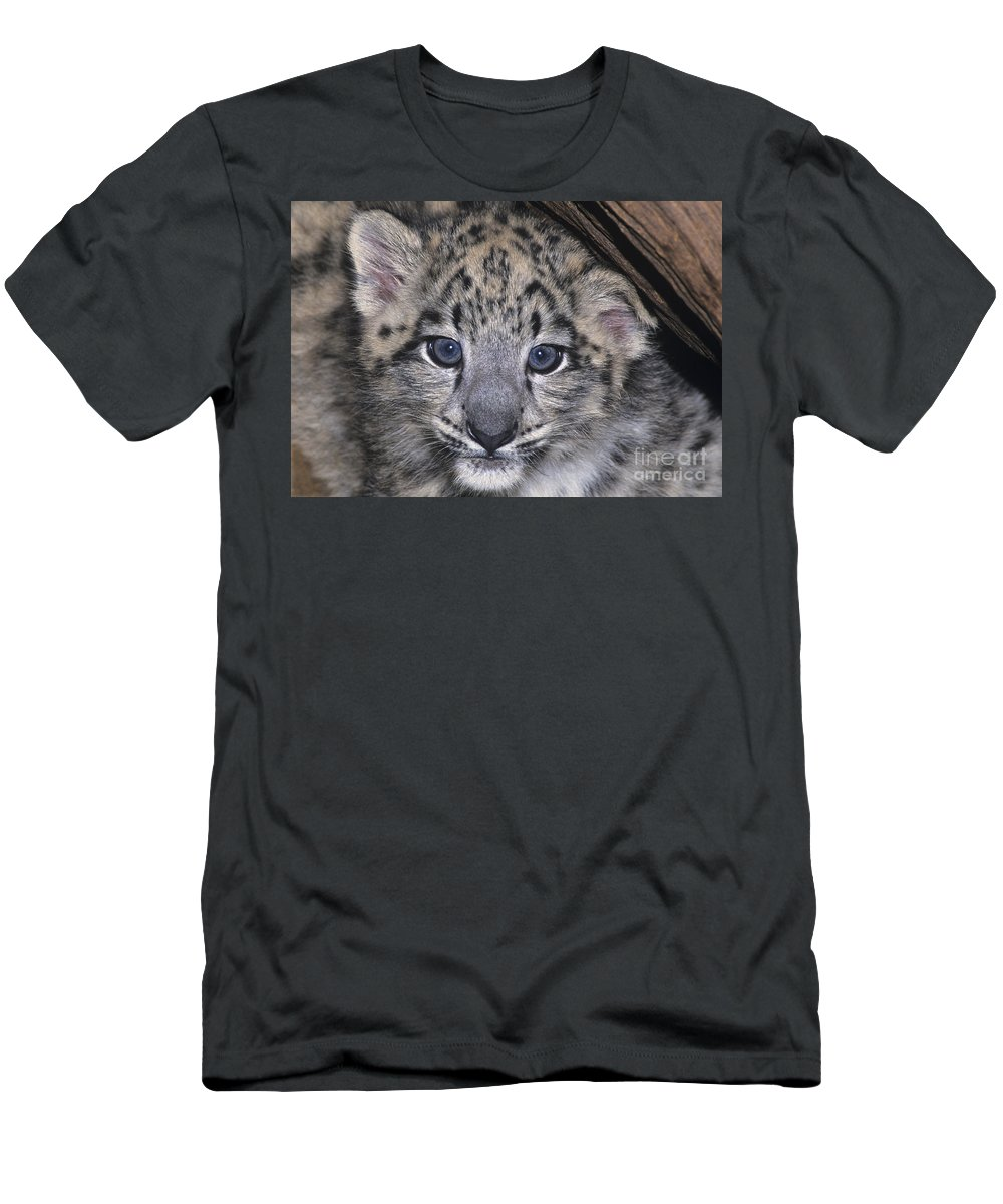 Asia Men's T-Shirt (Athletic Fit) featuring the photograph Snow Leopard Cub Endangered by Dave Welling