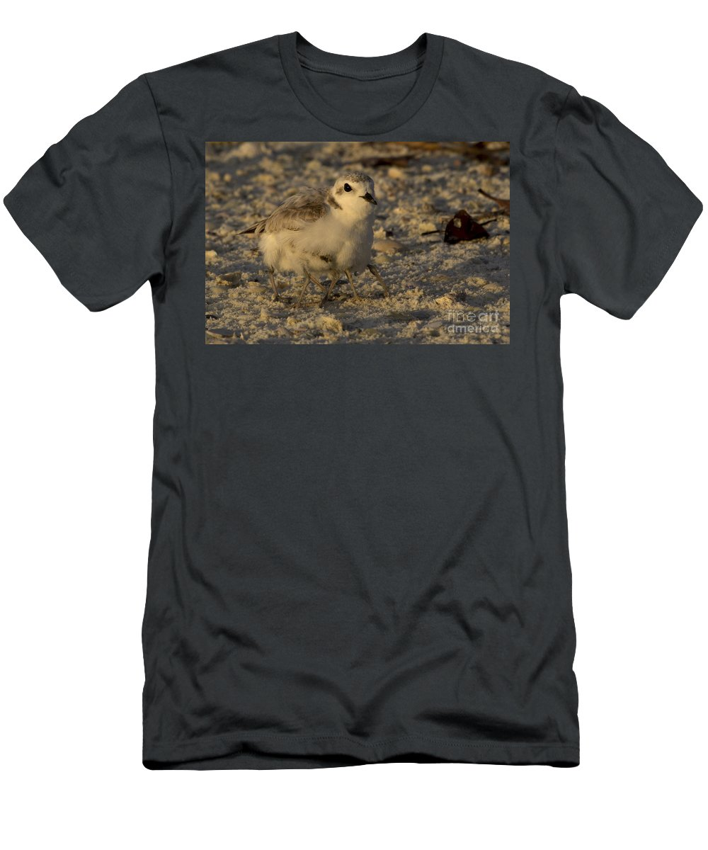 Snowy Plover Men's T-Shirt (Athletic Fit) featuring the photograph Snowy Plover Transforms Into A Spiderbird 2 by Meg Rousher