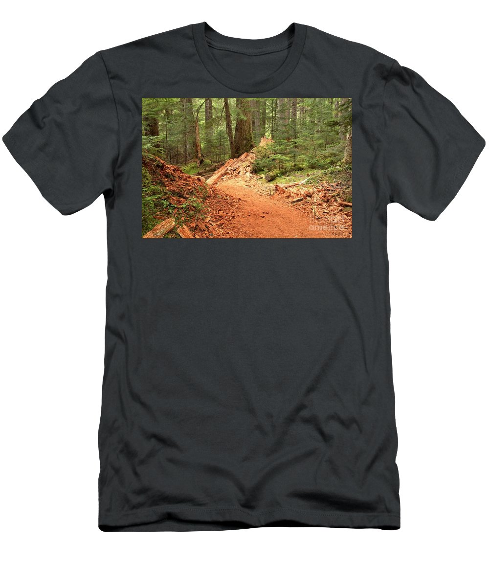 Cheakamus Rainforest Men's T-Shirt (Athletic Fit) featuring the photograph Soft Light Along The Cheakamus Lake Trail by Adam Jewell