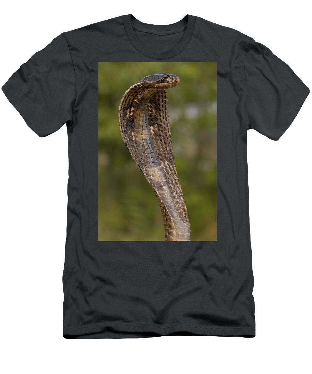 Feb0514 Men's T-Shirt (Athletic Fit) featuring the photograph Spectacled Cobra Gujarat India by Pete Oxford