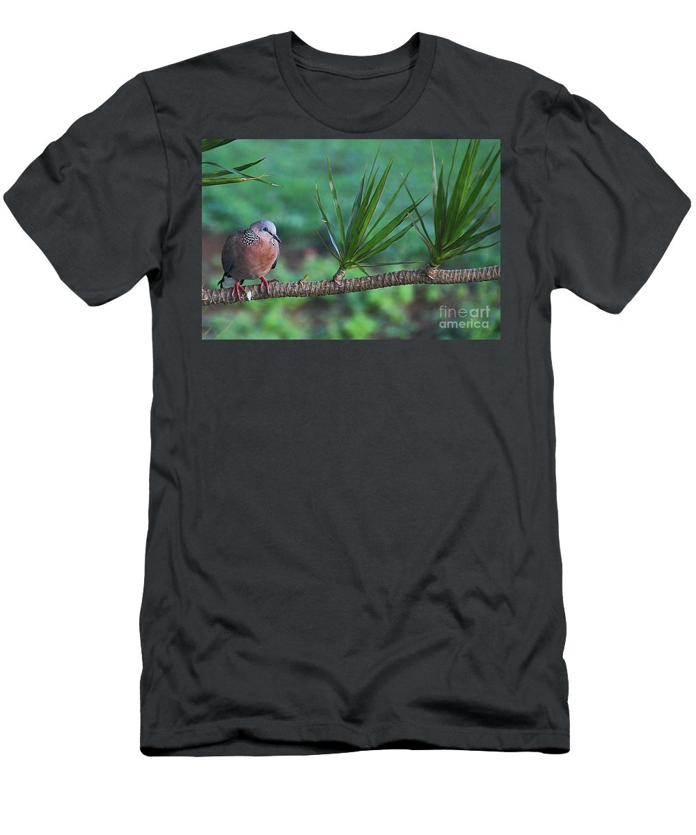 Spotted Dove Men's T-Shirt (Athletic Fit) featuring the photograph Spotted Dove by Elizabeth Winter