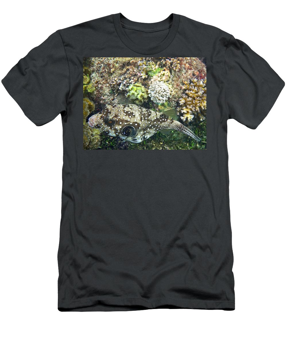 Fish Men's T-Shirt (Athletic Fit) featuring the photograph Spotted by Pete Marchetto