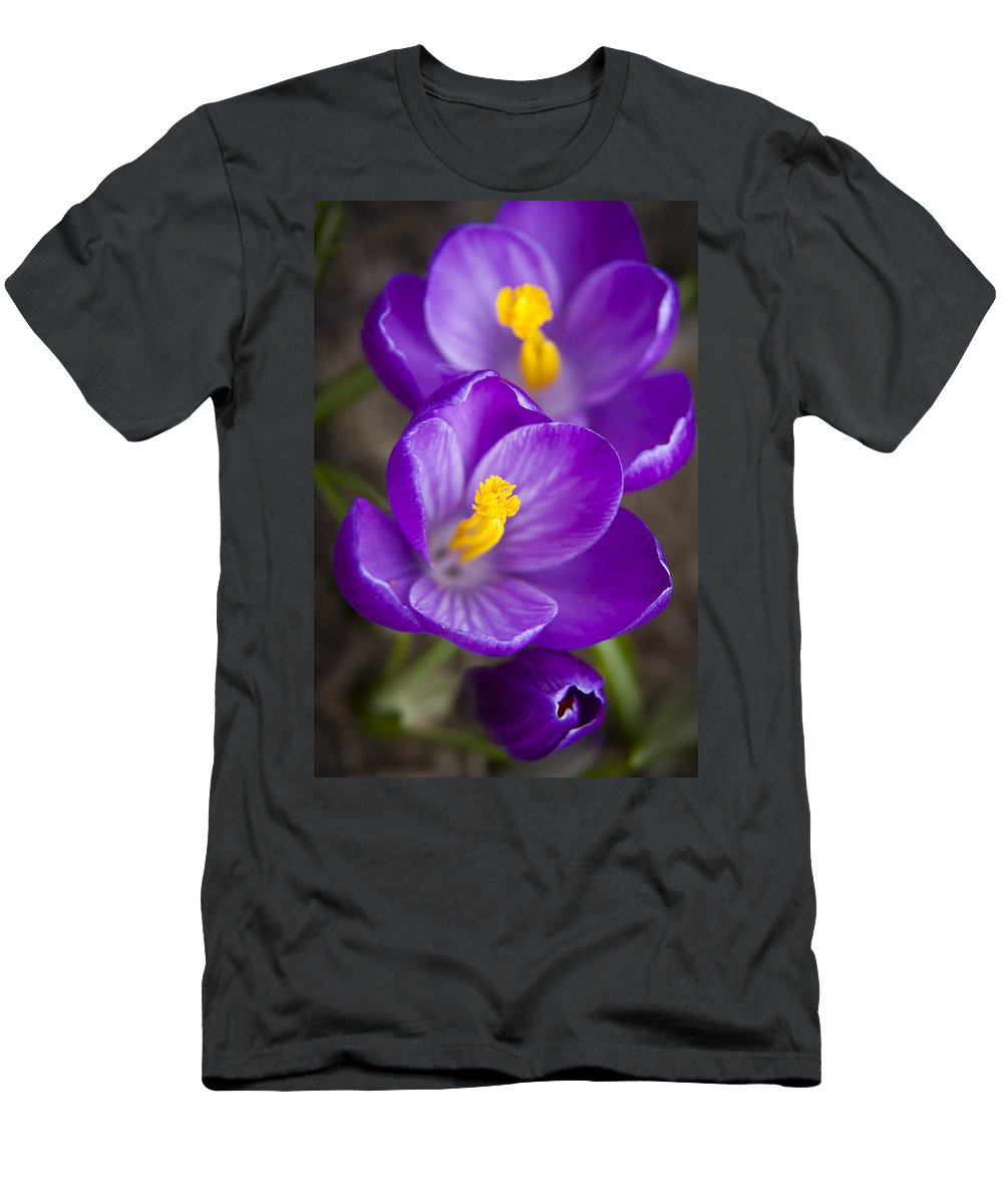 3scape Photos Men's T-Shirt (Athletic Fit) featuring the photograph Spring Crocus by Adam Romanowicz