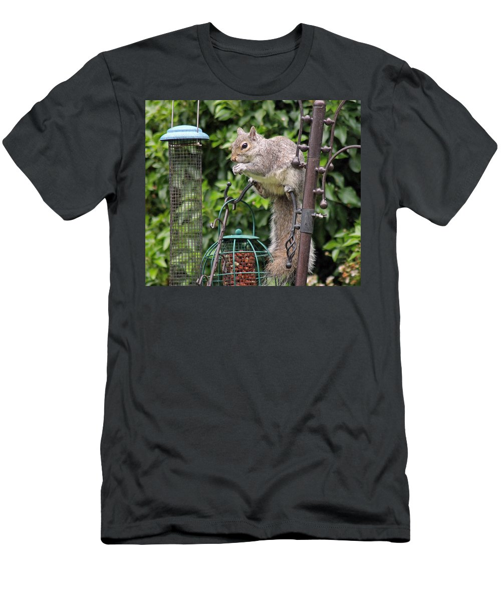 Grey Squirrel Men's T-Shirt (Athletic Fit) featuring the photograph Squirrel Eating Nuts by Tony Murtagh