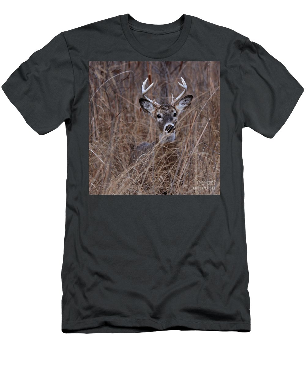 Deer Men's T-Shirt (Athletic Fit) featuring the photograph Stag by Lori Tordsen