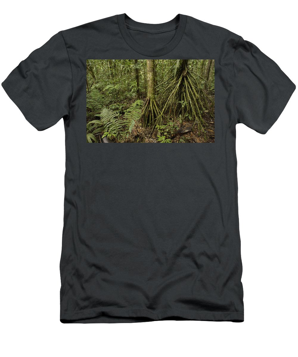 Feb0514 Men's T-Shirt (Athletic Fit) featuring the photograph Stilt Roots In The Rainforest Ecuador by Pete Oxford