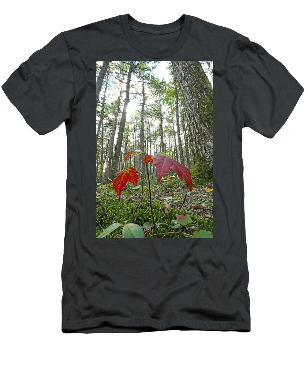 Feb0514 Men's T-Shirt (Athletic Fit) featuring the photograph Sugar Maple In Old-growth Canadian by Scott Leslie