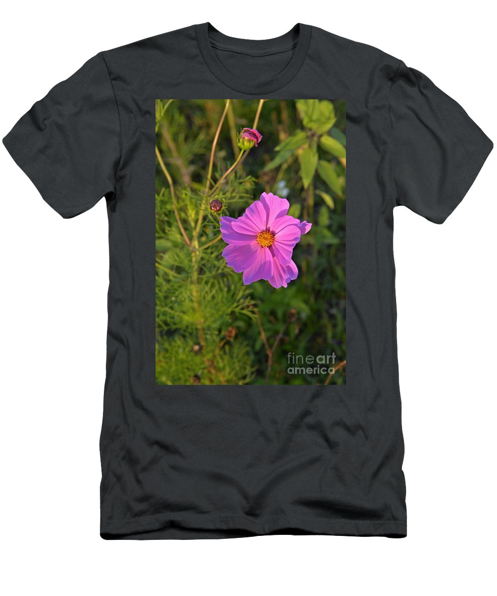 Wildflowers Men's T-Shirt (Athletic Fit) featuring the photograph Sun Lit Wildflower by Roy Thoman