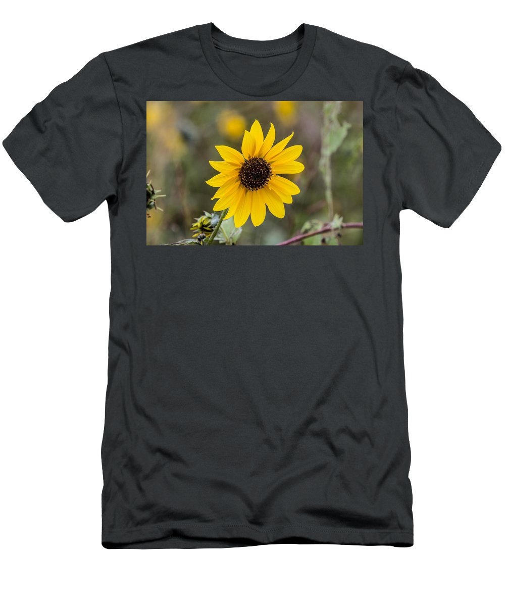 Sunflower Men's T-Shirt (Athletic Fit) featuring the photograph Sun Of A Cloudy Day by Renny Spencer