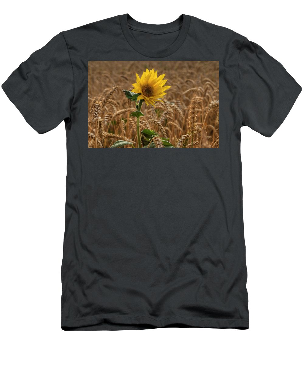 Sommer Men's T-Shirt (Athletic Fit) featuring the pyrography Sunflowers At Corny by Steffen Gierok