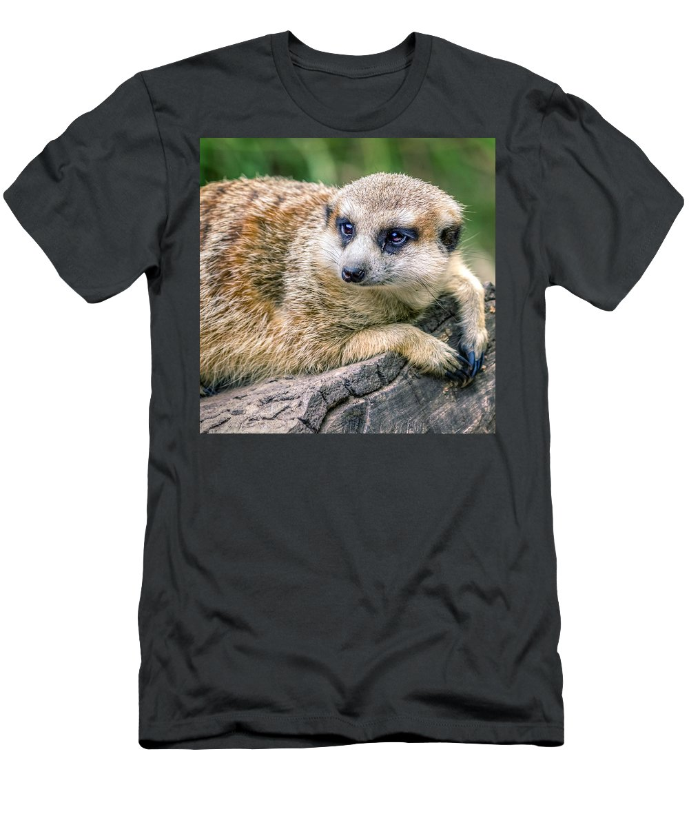 Africa Men's T-Shirt (Athletic Fit) featuring the photograph Suricata Suricatta by Rob Sellers