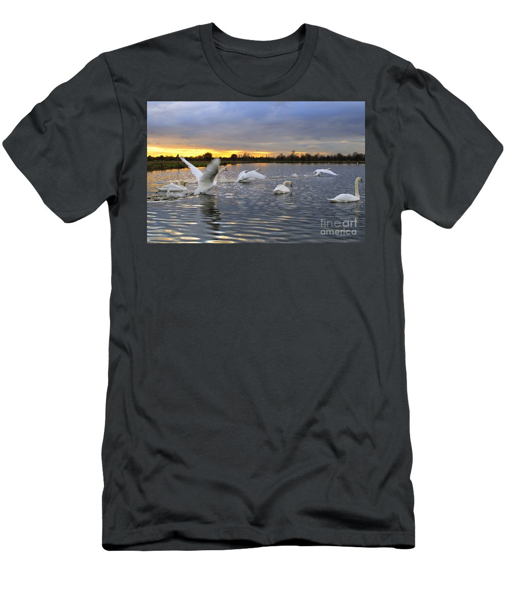England Men's T-Shirt (Athletic Fit) featuring the photograph Swans At Sunset by Lana Enderle