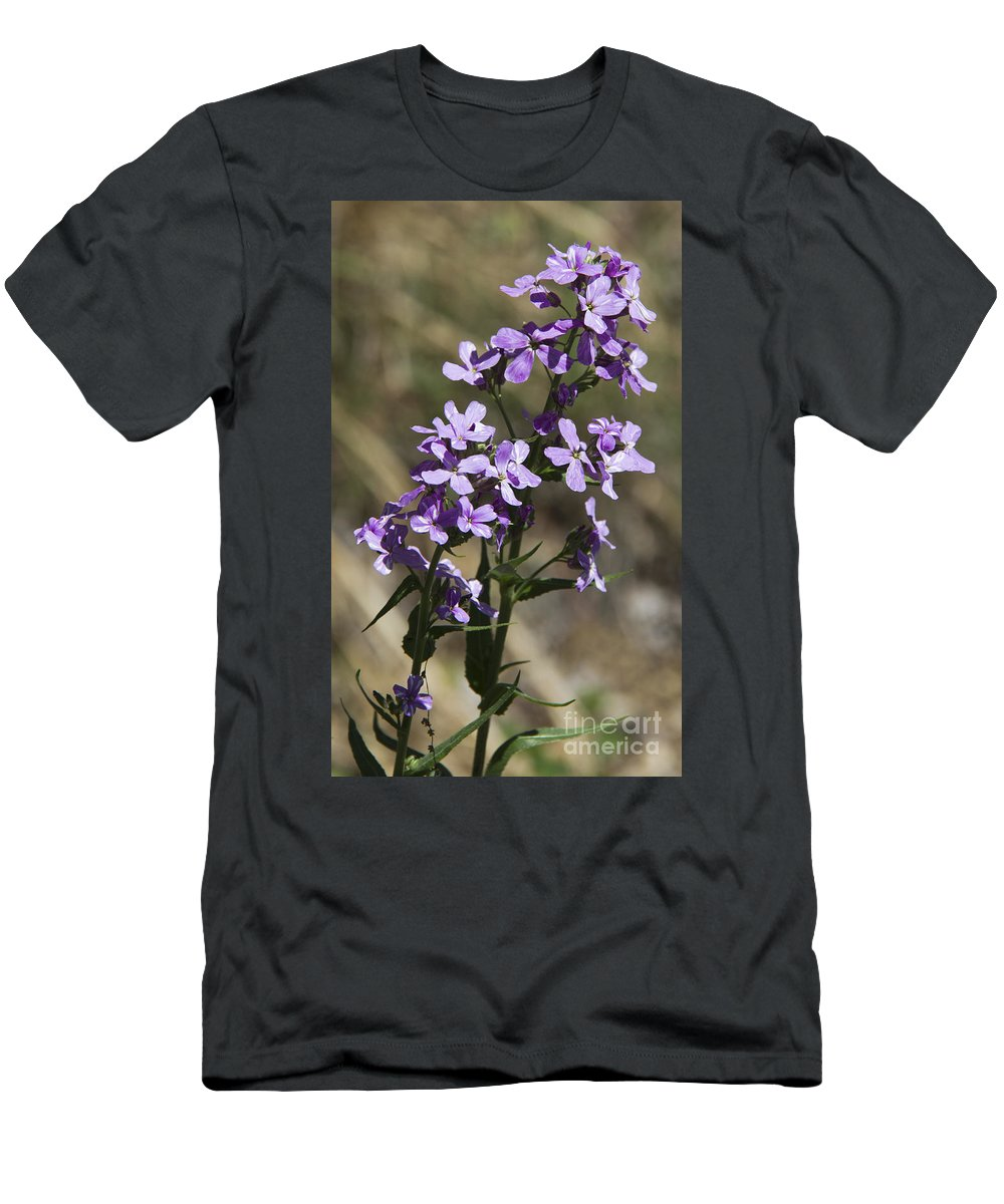 Sweet Dame�s Rocket Men's T-Shirt (Athletic Fit) featuring the photograph Sweet Dames Rocket by Teresa Mucha