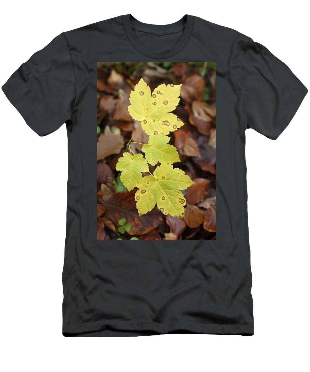 Feb0514 Men's T-Shirt (Athletic Fit) featuring the photograph Sycamore Leaves Germany by Duncan Usher