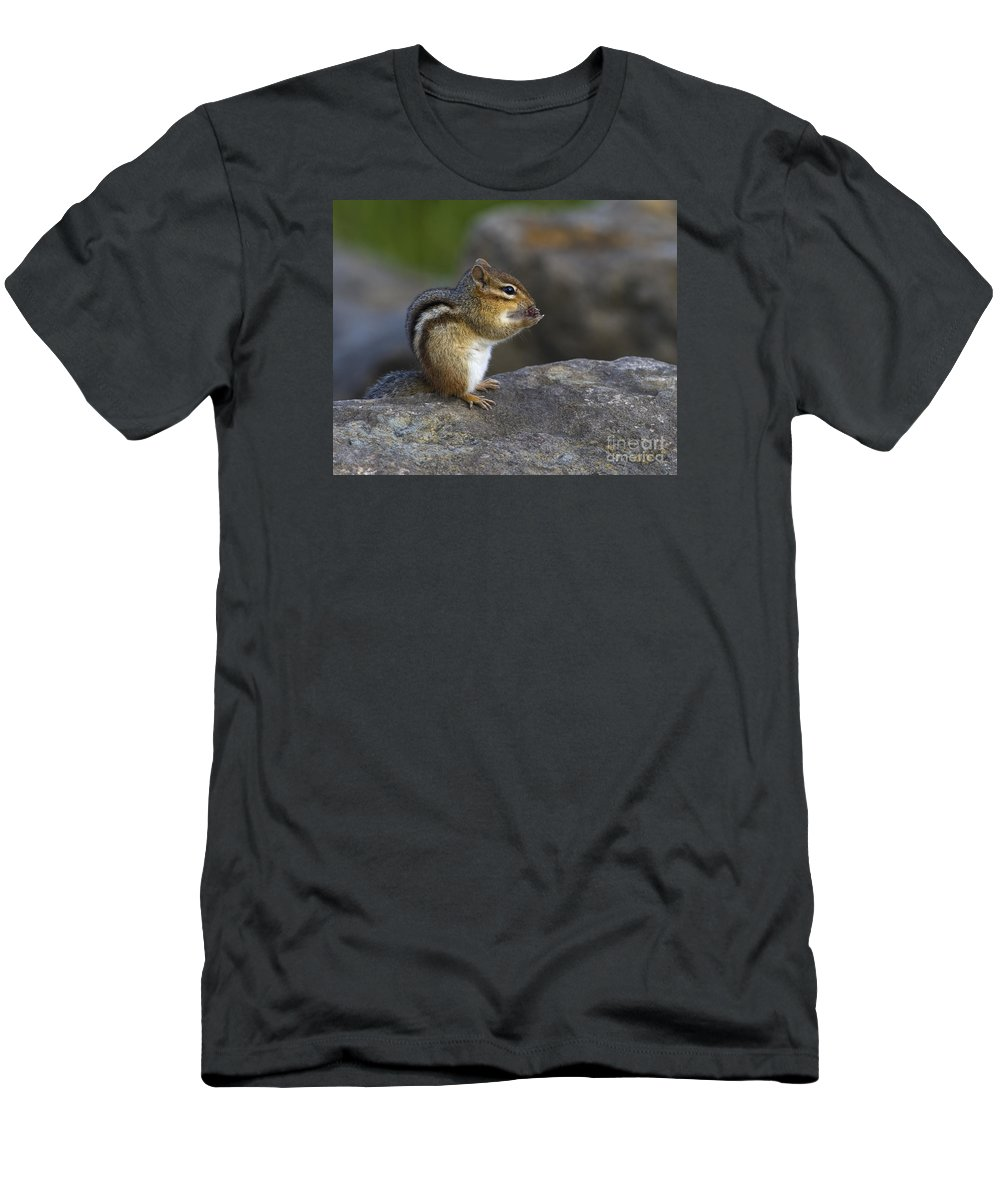 Festblues Men's T-Shirt (Athletic Fit) featuring the photograph Tai Chi Munk.. by Nina Stavlund