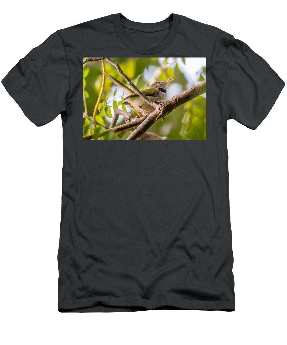 Bird Men's T-Shirt (Athletic Fit) featuring the photograph Tailor Bird by Gaurav Singh