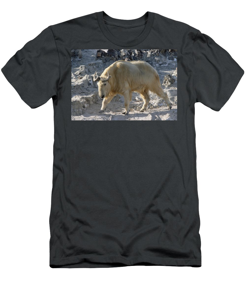 Feb0514 Men's T-Shirt (Athletic Fit) featuring the photograph Takin China by Konrad Wothe