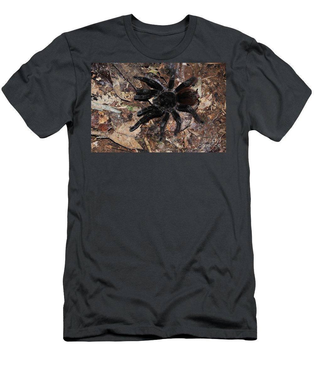 Tarantula Men's T-Shirt (Athletic Fit) featuring the photograph Tarantula Amazon Brazil by Bob Christopher