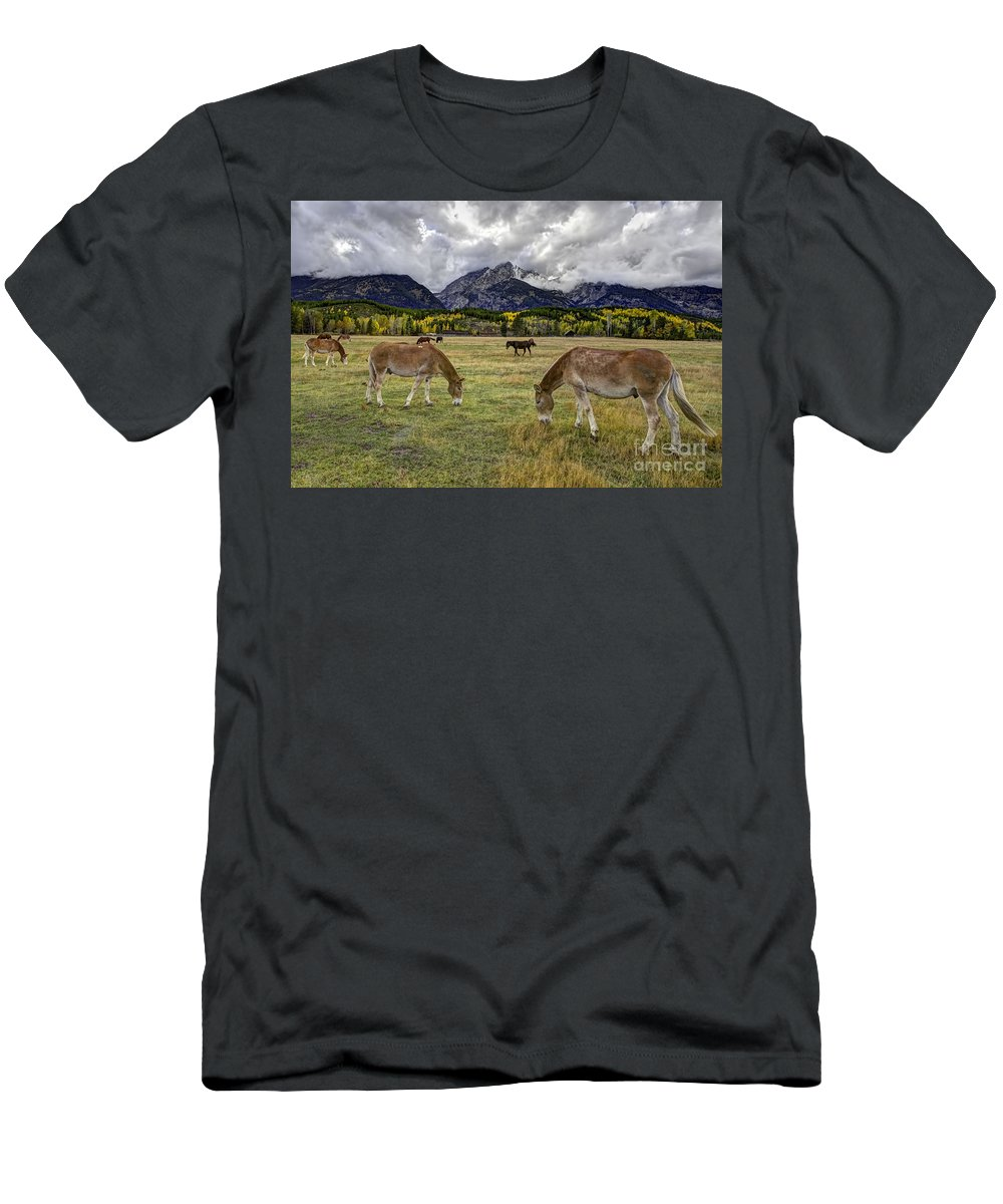 Teton Pastorale Men's T-Shirt (Athletic Fit) featuring the photograph Teton Pastorale by Gary Holmes