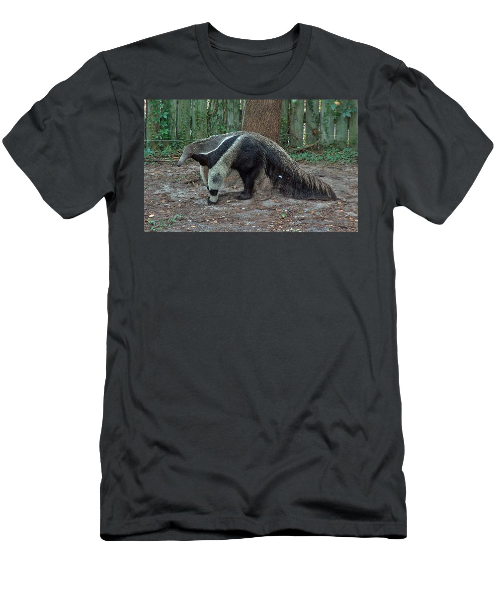 Ants Men's T-Shirt (Athletic Fit) featuring the photograph The Ant Machine...aardvark by Barb Dalton