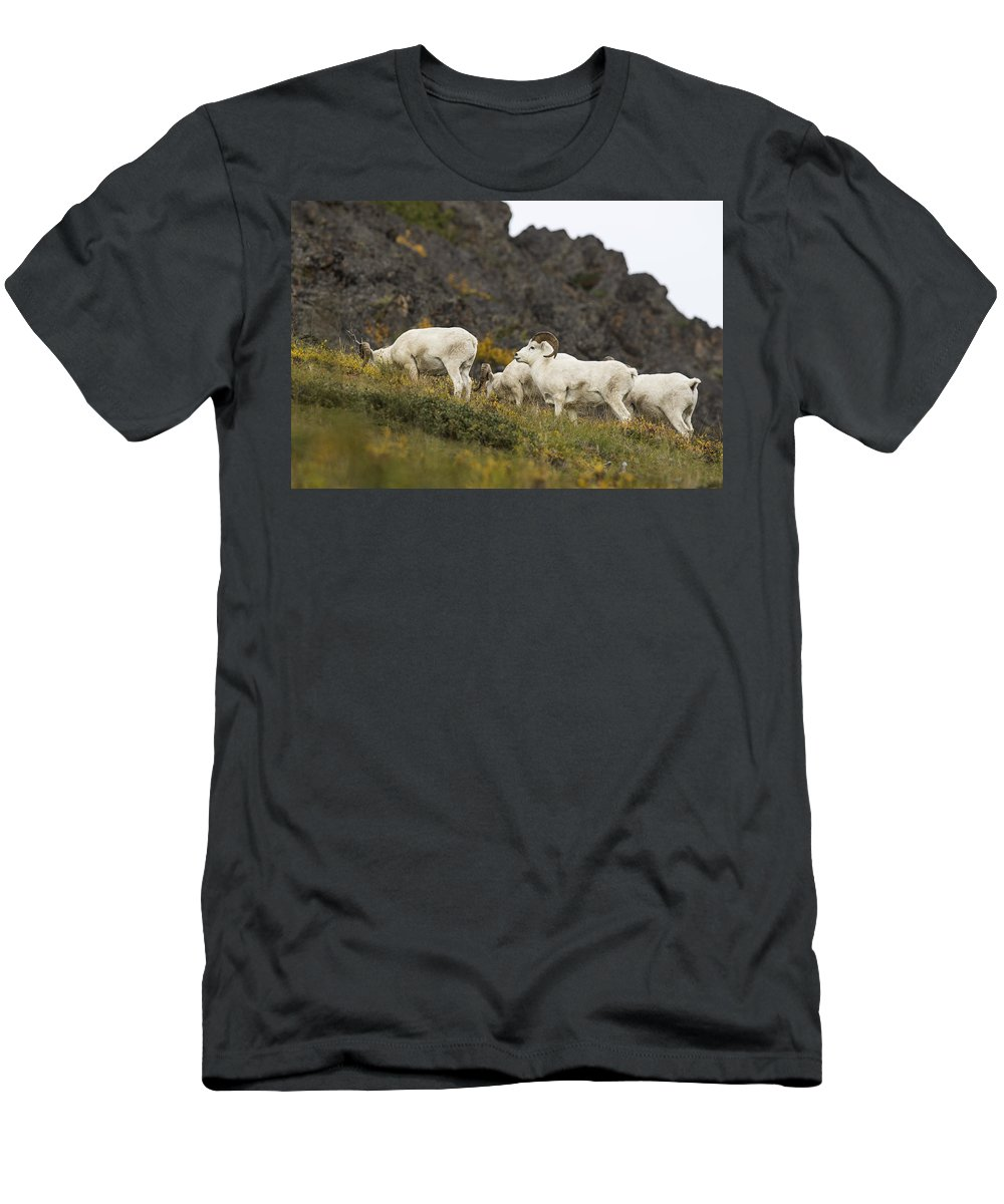Ovis Dalli Men's T-Shirt (Athletic Fit) featuring the photograph The Boys by Ted Raynor