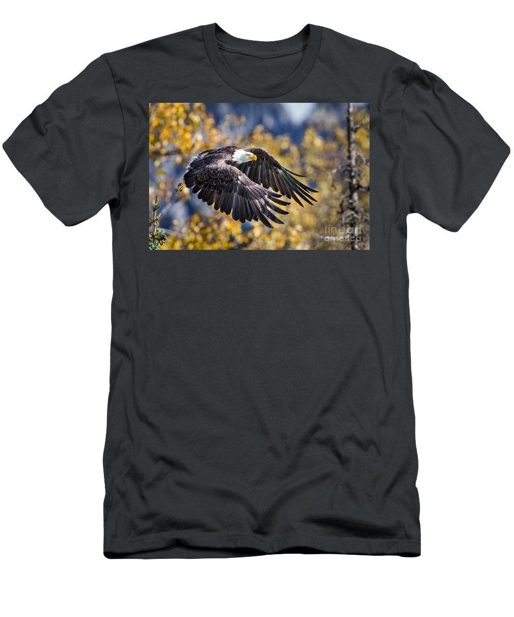 Alaska Adventure Men's T-Shirt (Athletic Fit) featuring the photograph The Eagle by Rob Daugherty