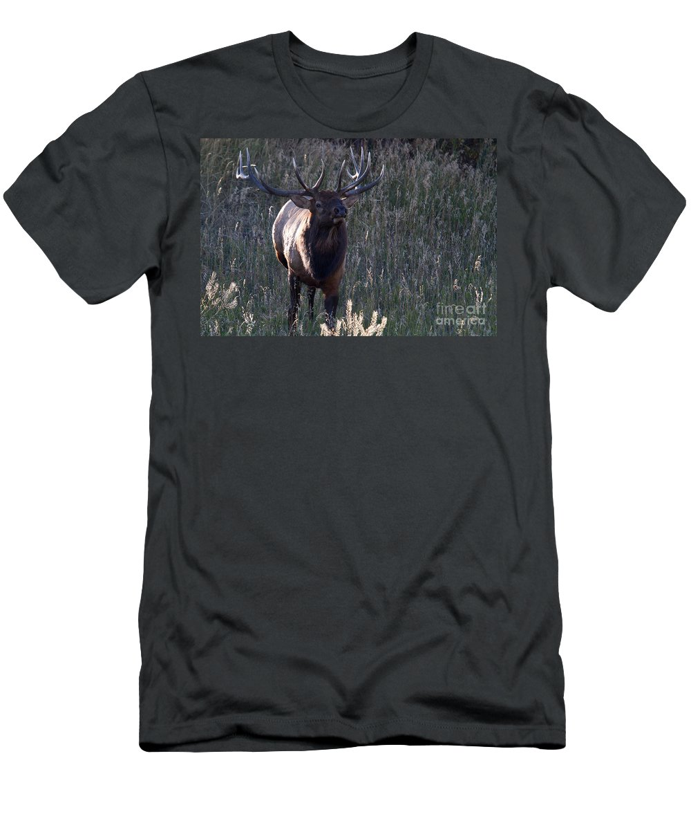 Elk Men's T-Shirt (Athletic Fit) featuring the photograph The Elegant Elk by Jim Garrison