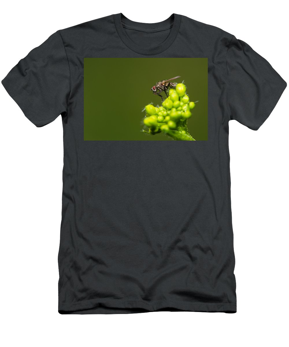 Animal Men's T-Shirt (Athletic Fit) featuring the photograph The Hidden World Of Khaki - Featured 3 by Alexander Senin