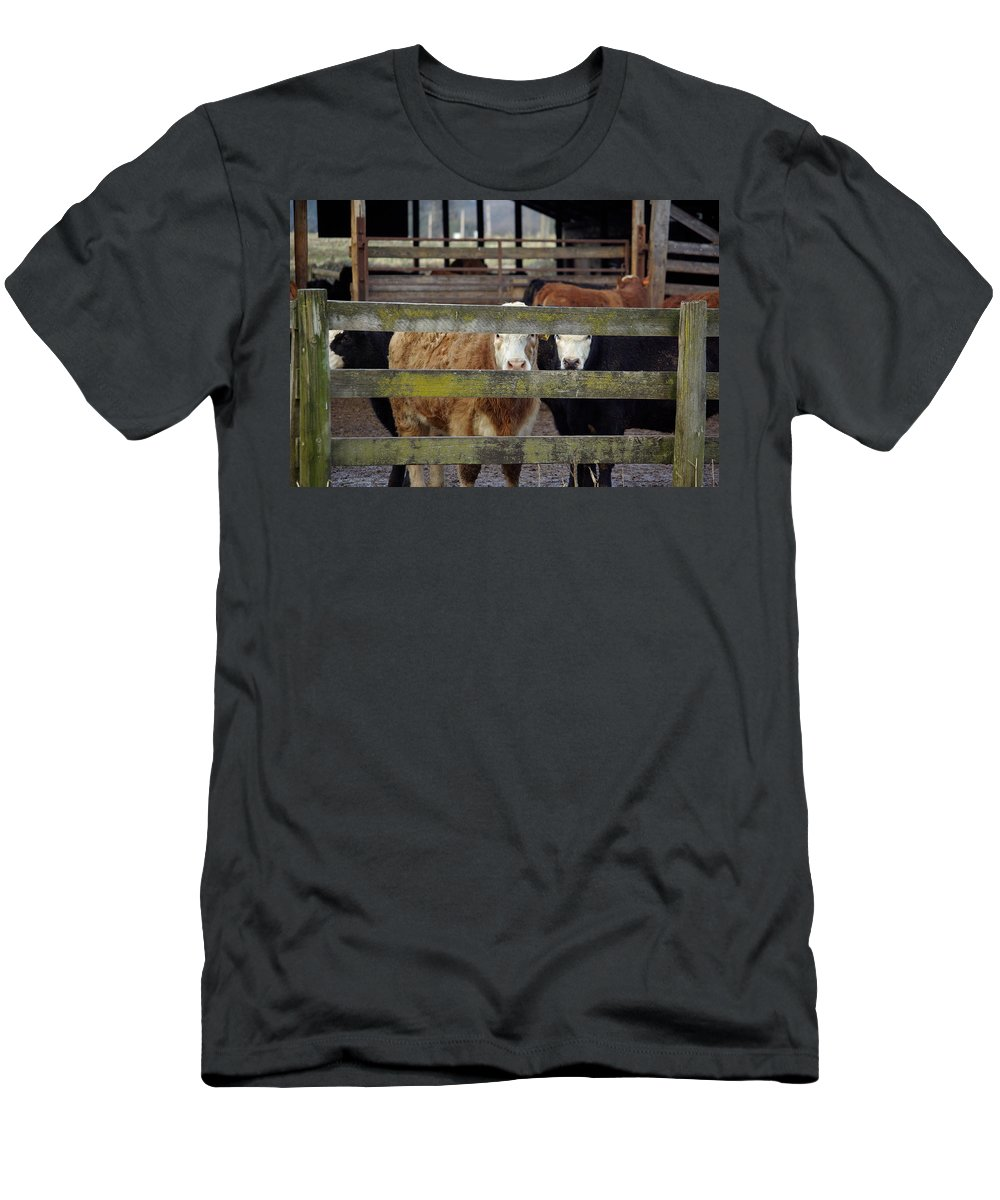 Cow Men's T-Shirt (Athletic Fit) featuring the photograph The Watchers by Cindy Johnston