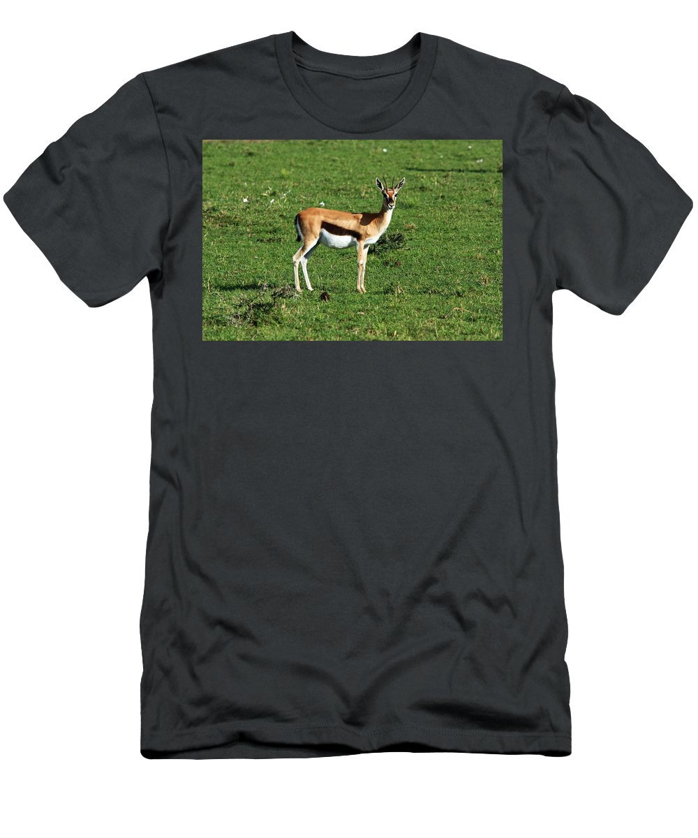Africa Men's T-Shirt (Athletic Fit) featuring the photograph Thomson Gazelle by Aidan Moran