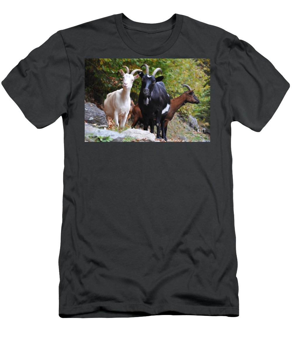 Three Men's T-Shirt (Athletic Fit) featuring the photograph Three Goats by Mats Silvan