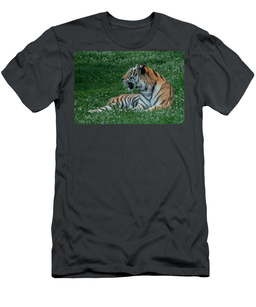 Tiger Men's T-Shirt (Athletic Fit) featuring the photograph Tiger At Rest 4 by Photos By Cassandra