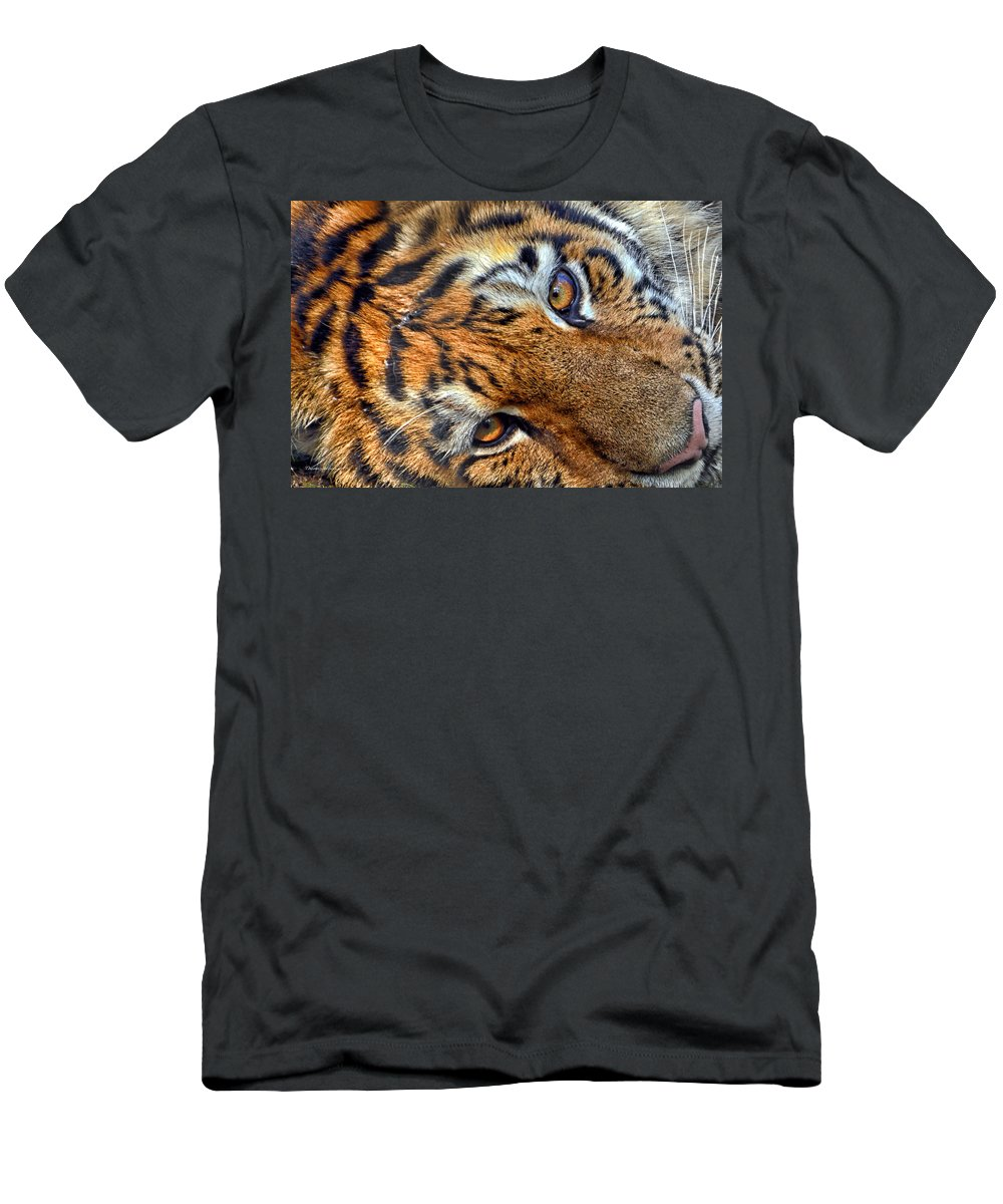 Tiger Eyes Men's T-Shirt (Athletic Fit) featuring the photograph Tiger Peepers by Thomas Woolworth