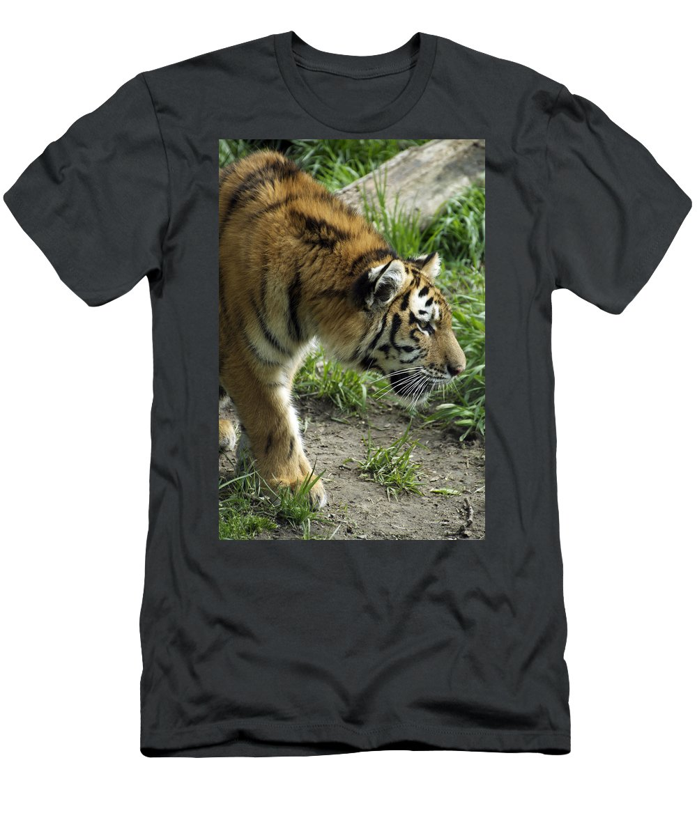 Tiger Men's T-Shirt (Athletic Fit) featuring the photograph Tiger Stalking by Thomas Woolworth