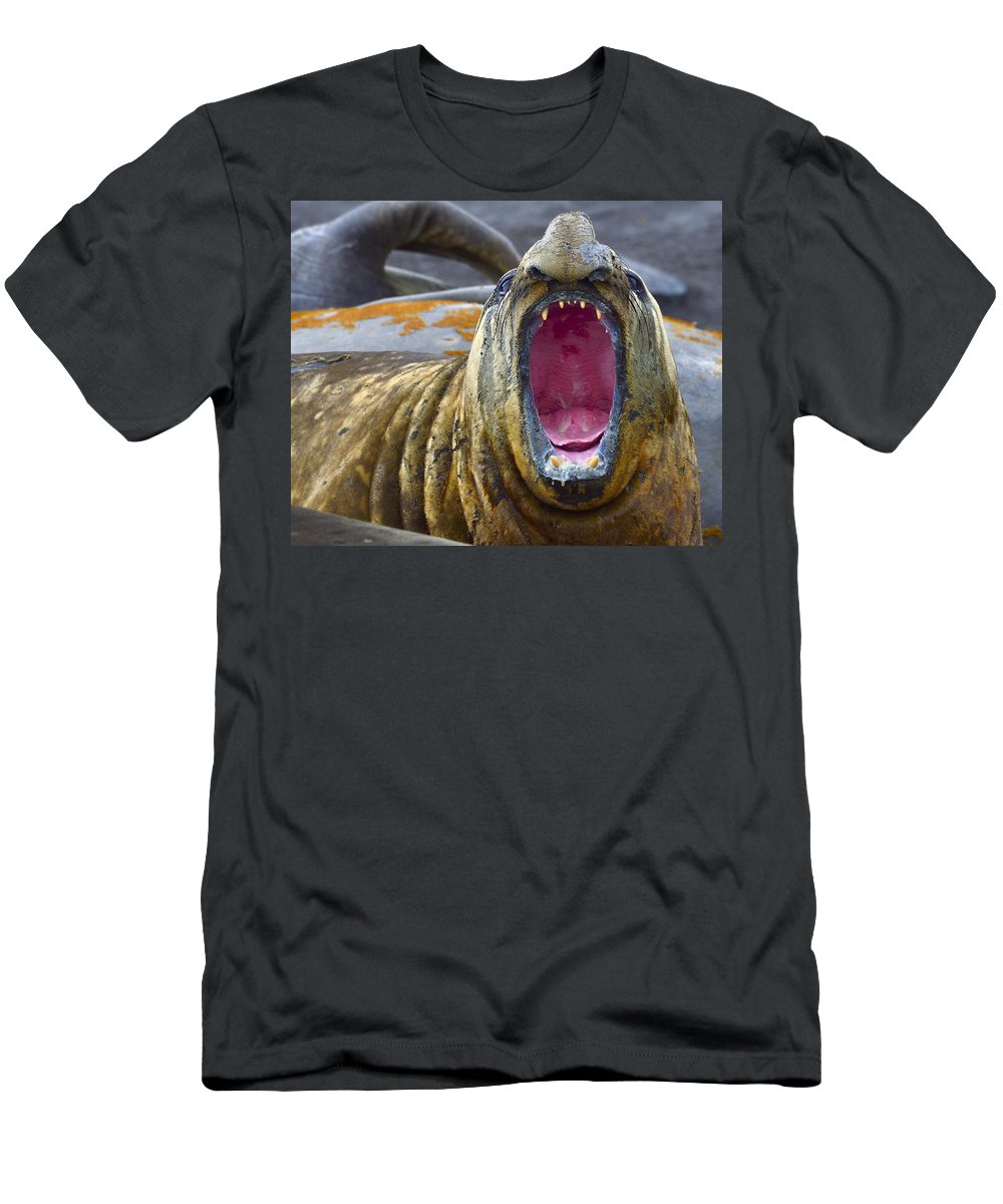 Southern Elephant Seal Men's T-Shirt (Athletic Fit) featuring the photograph Tonsils And Trunks by Tony Beck
