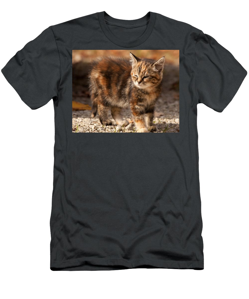 Kitten Men's T-Shirt (Athletic Fit) featuring the photograph Too Bright by Richard Kitchen