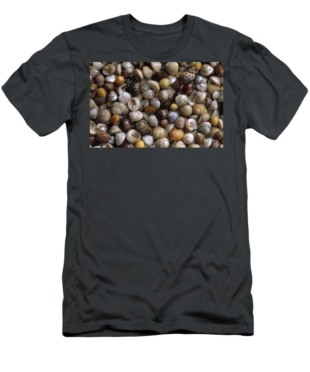 Feb0514 Men's T-Shirt (Athletic Fit) featuring the photograph Topshells Whelk And Periwinkle Shells by Duncan Usher